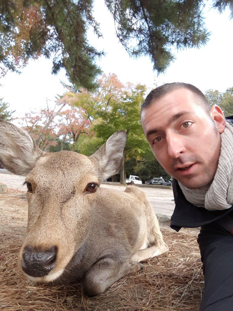 Daim Nara Japon