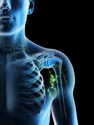 lymph nodes 3D view lymphatic brushing