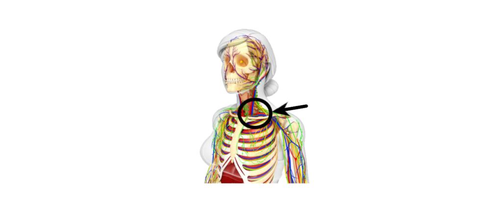 Junction  Vein under subclavian Jugular vein